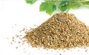 Celerly Seed Extract