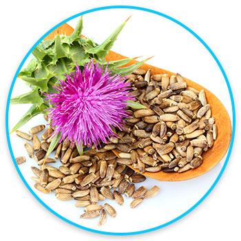 divine-health-21-day-detox-liver-detox-milk-thistle-image1